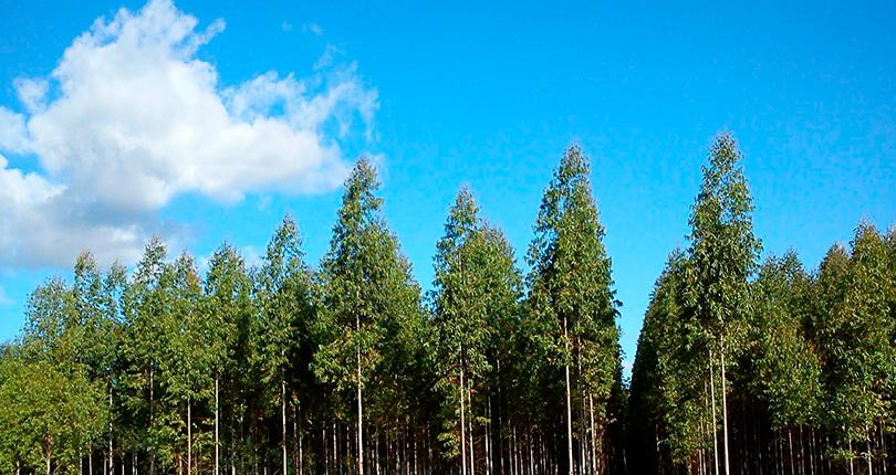 Nuevas ayudas forestales y a explotaciones ganaderas en Castilla y León